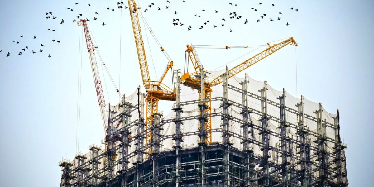 cranes birds and building
